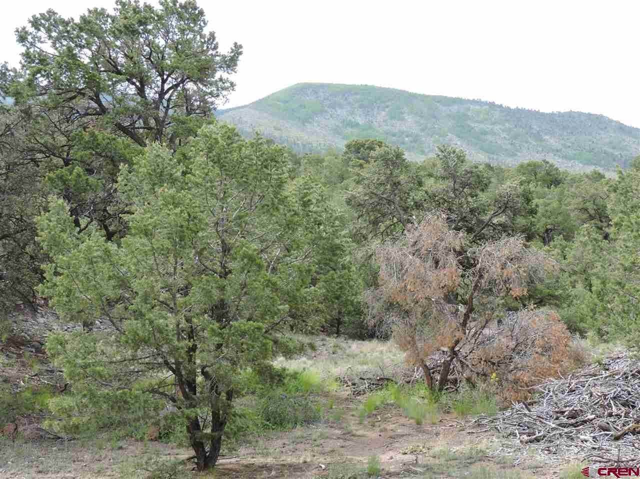 6. Land for Sale at TBD Cedar Ridge Road Mosca, Colorado 81146 United States