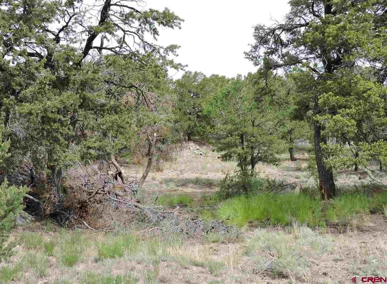 7. Land for Sale at TBD Cedar Ridge Road Mosca, Colorado 81146 United States